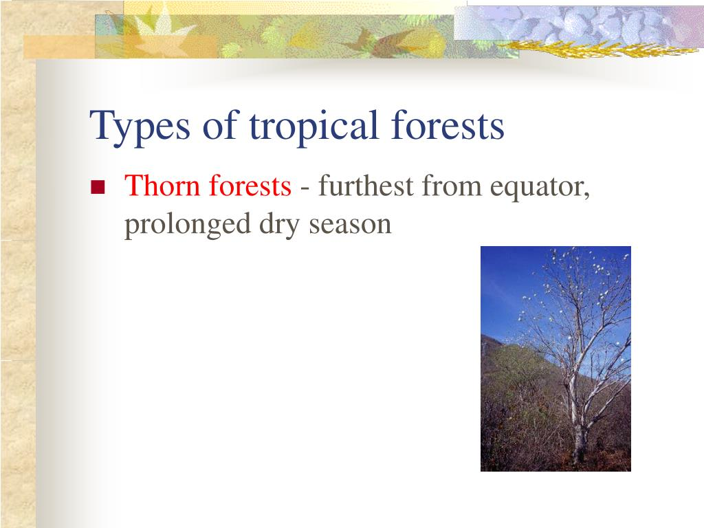 Types of tropical forests