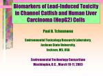 biomarkers of lead induced toxicity in channel catfish and human liver carcinoma hepg2 cells
