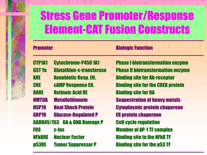 Stress Gene Promoter/Response Element-CAT Fusion Constructs