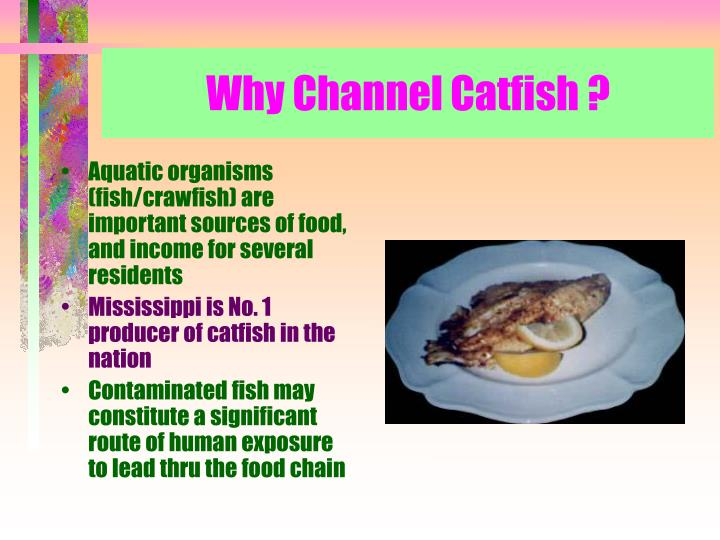 Why Channel Catfish ?