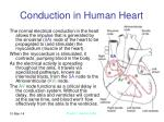 conduction in human heart15