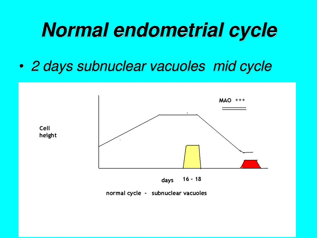 Normal endometrial cycle
