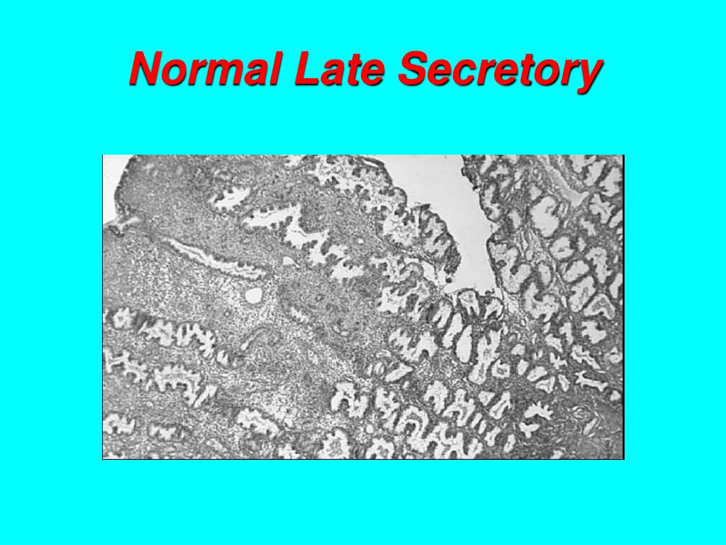 Normal Late Secretory
