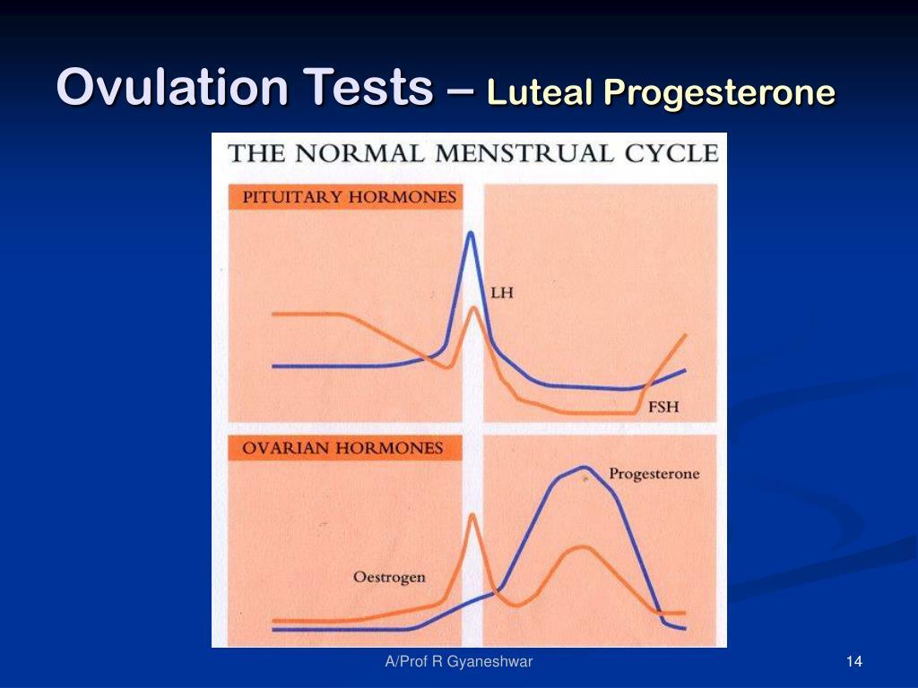 Ovulation Tests –