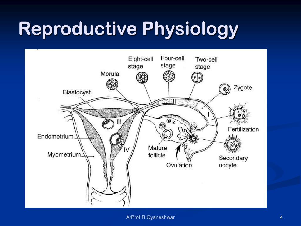 Reproductive Physiology