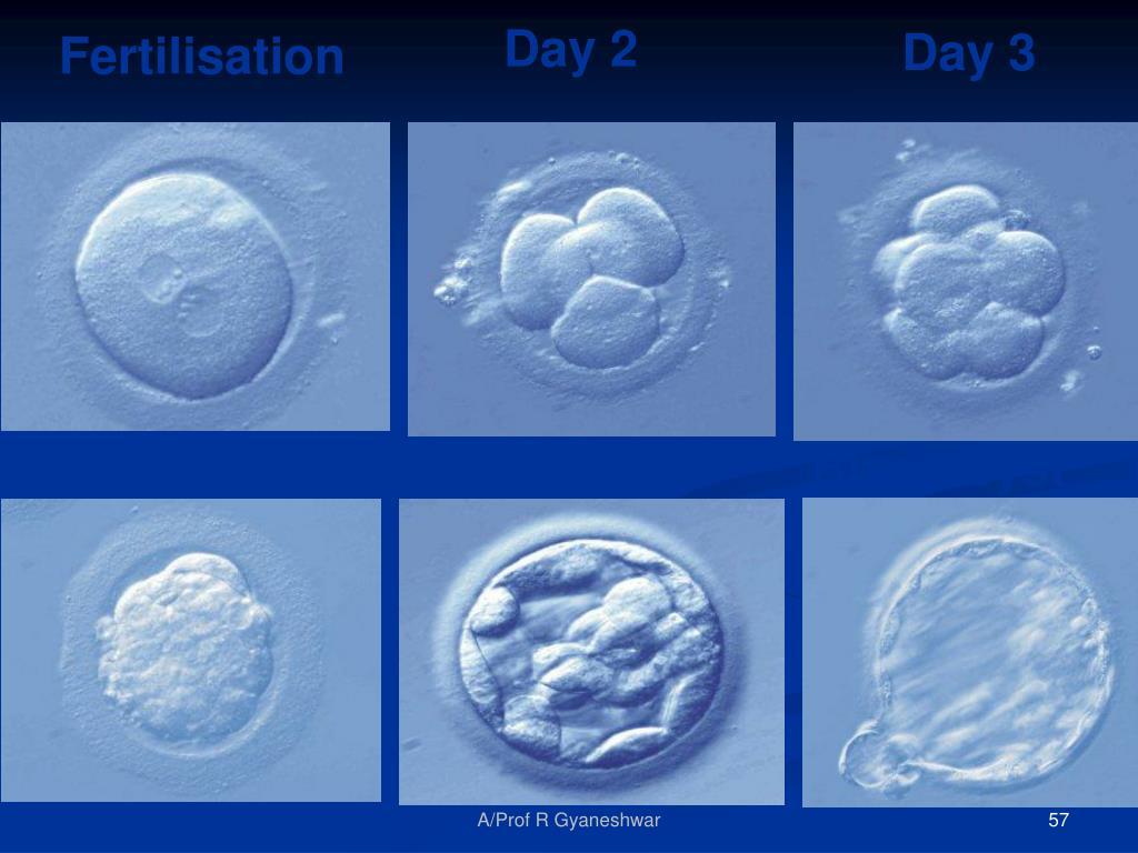 Fertilisation