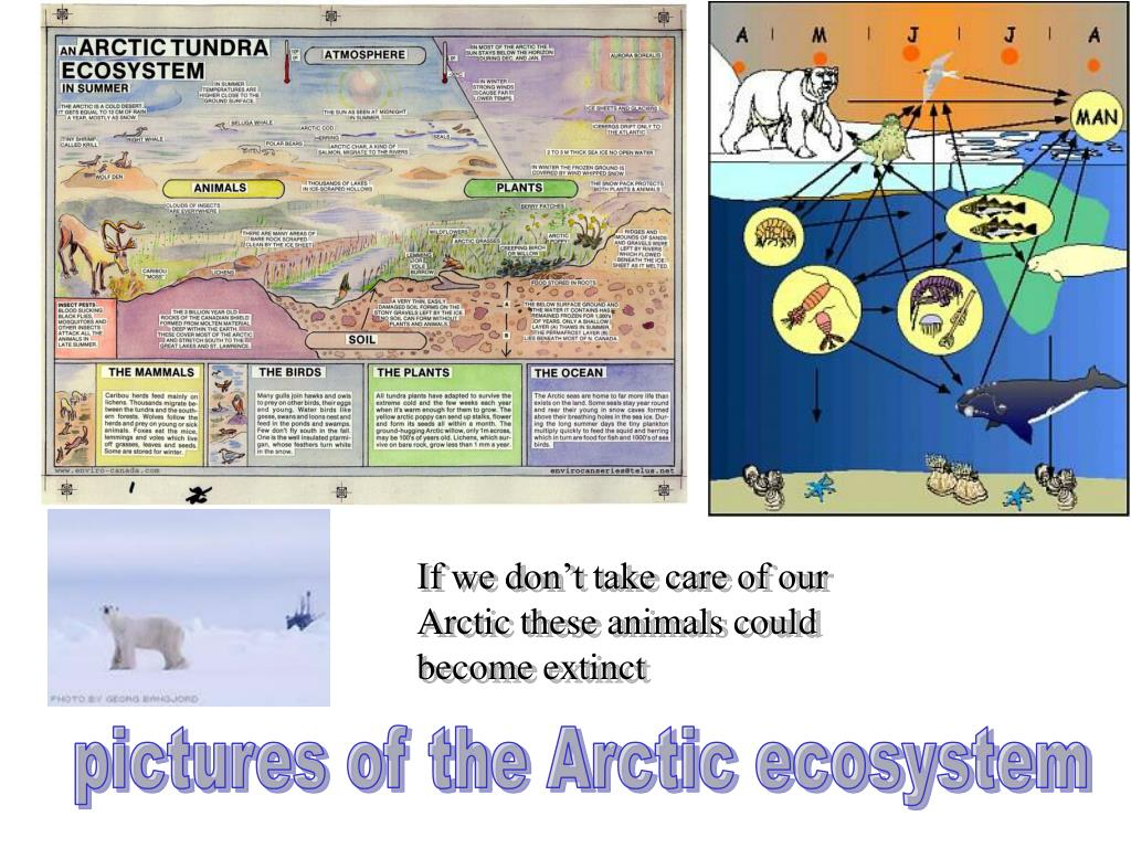 If we don't take care of our Arctic these animals could become extinct