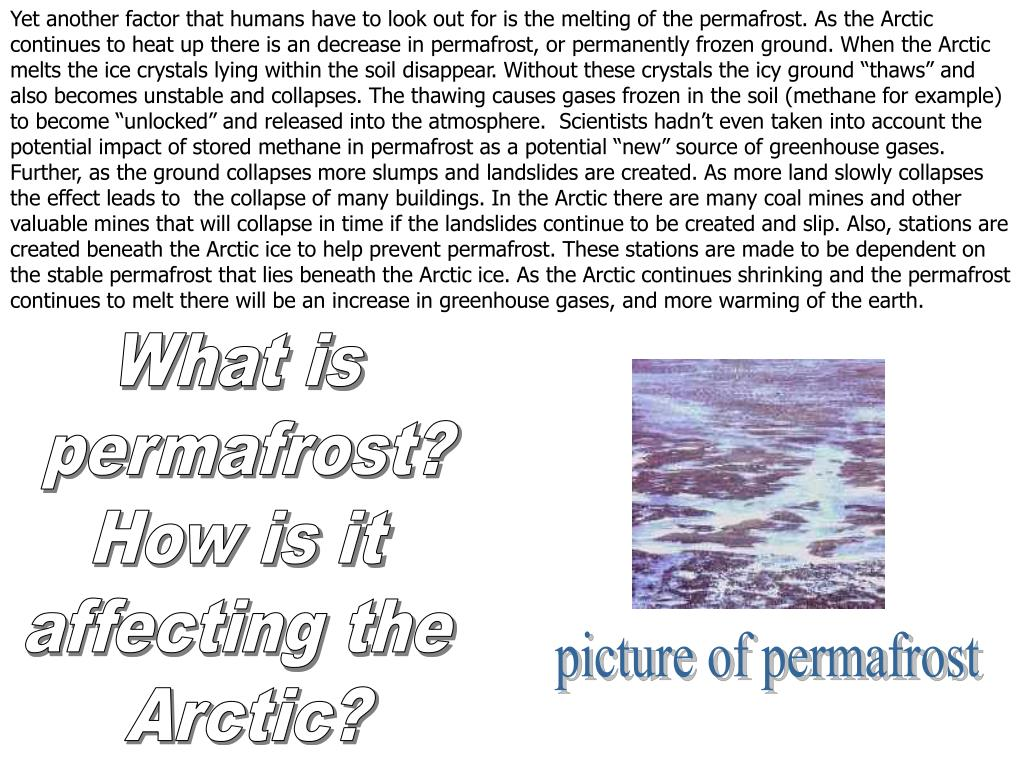 "Yet another factor that humans have to look out for is the melting of the permafrost. As the Arctic continues to heat up there is an decrease in permafrost, or permanently frozen ground. When the Arctic melts the ice crystals lying within the soil disappear. Without these crystals the icy ground ""thaws"" and also becomes unstable and collapses. The thawing causes gases frozen in the soil (methane for example) to become ""unlocked"" and released into the atmosphere.  Scientists hadn't even taken into account the potential impact of stored methane in permafrost as a potential ""new"" source of greenhouse gases. Further, as the ground collapses more slumps and landslides are created. As more land slowly collapses the effect leads to  the collapse of many buildings. In the Arctic there are many coal mines and other valuable mines that will collapse in time if the landslides continue to be created and slip. Also, stations are created beneath the Arctic ice to help prevent permafrost. These stations are made to be dependent on the stable permafrost that lies beneath the Arctic ice. As the Arctic continues shrinking and the permafrost continues to melt there will be an increase in greenhouse gases, and more warming of the earth."