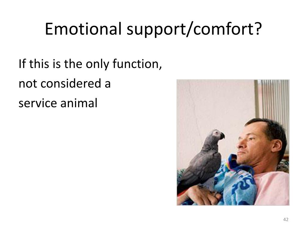 Emotional support/comfort?
