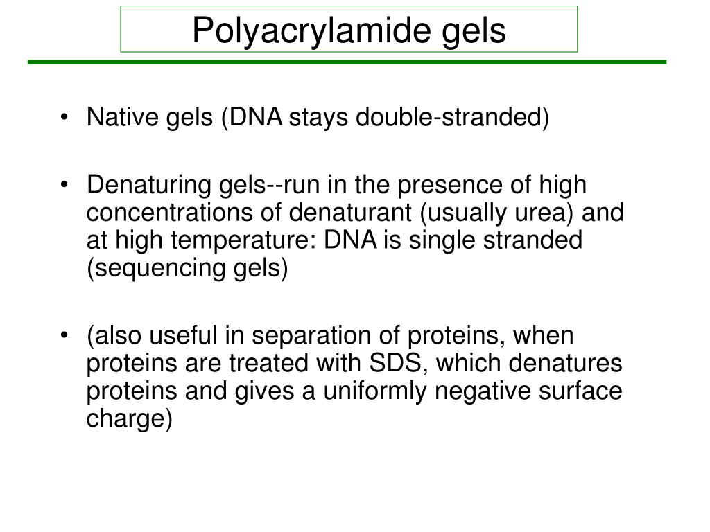 Polyacrylamide gels