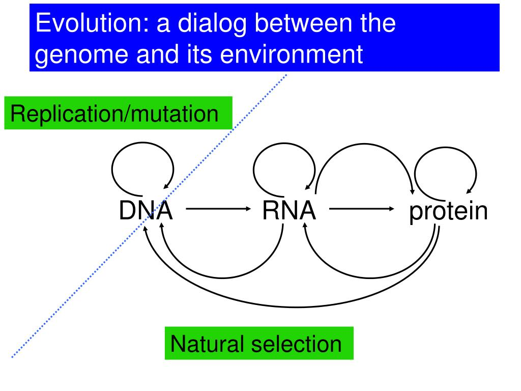 Evolution: a dialog between the genome and its environment