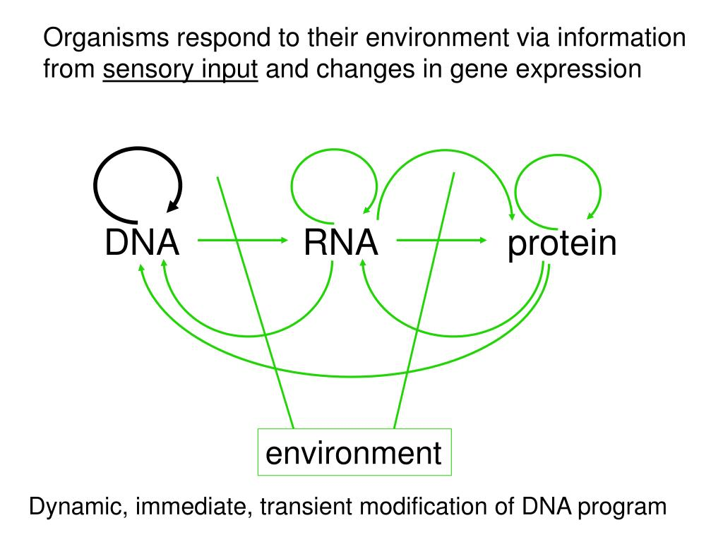 Organisms respond to their environment via information from