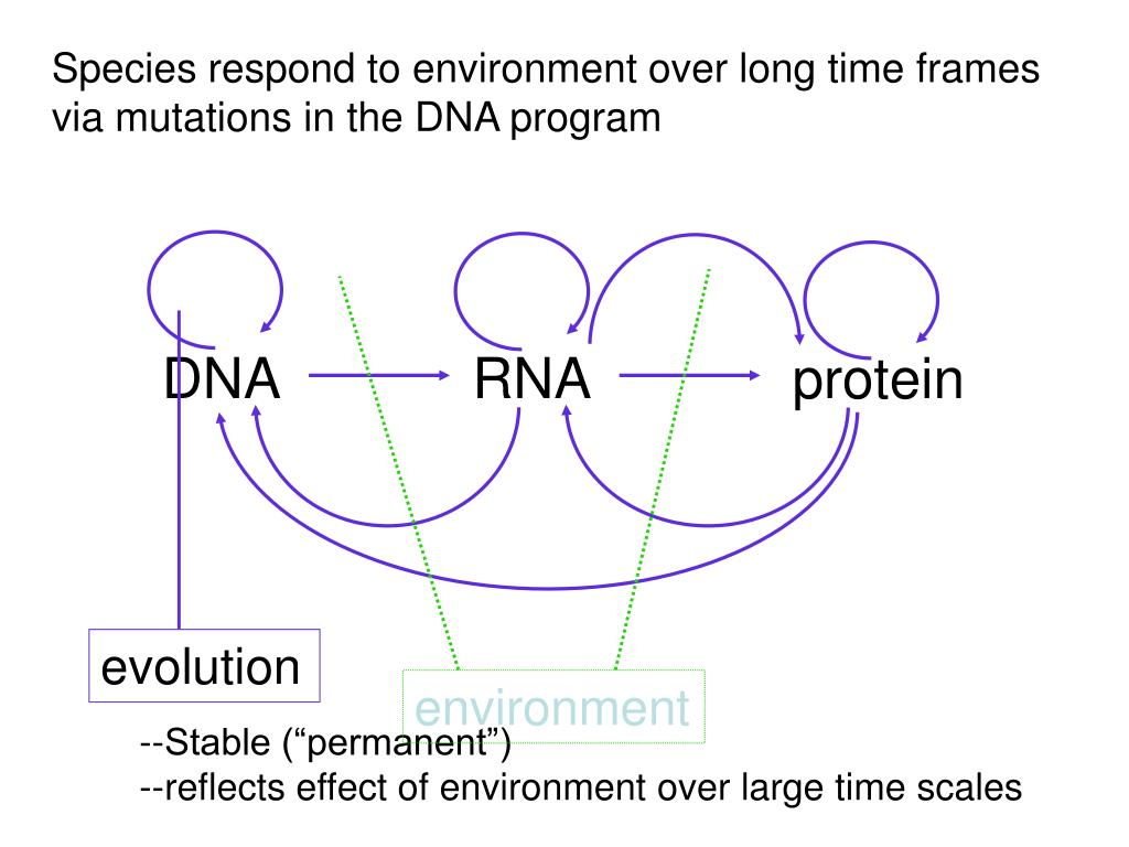 Species respond to environment over long time frames via mutations in the DNA program