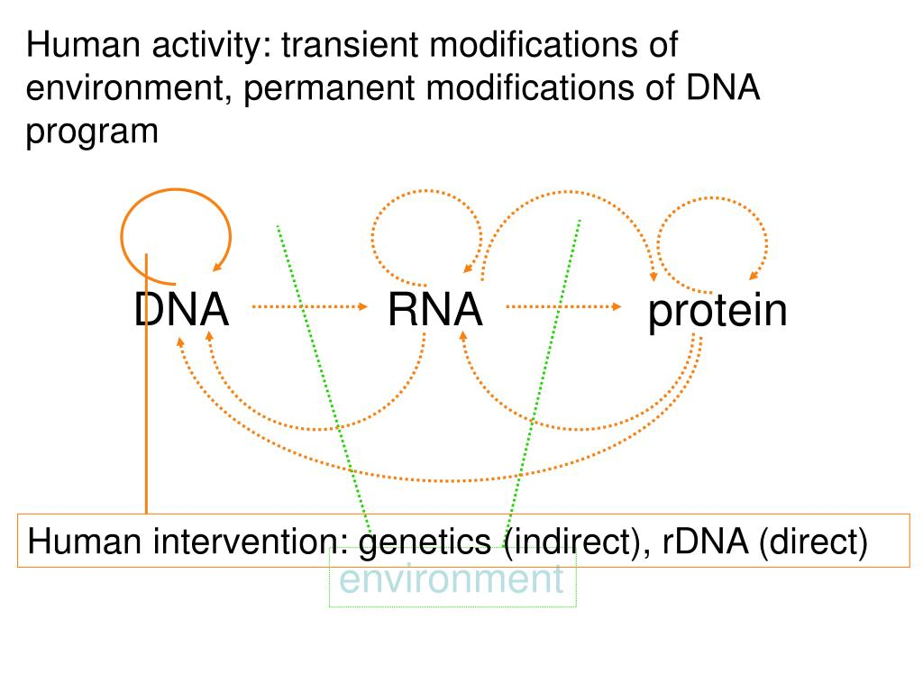 Human activity: transient modifications of environment, permanent modifications of DNA program