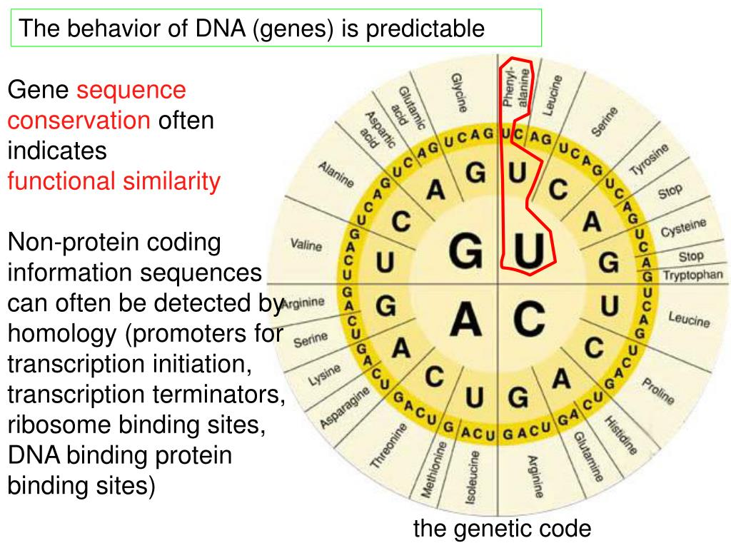 The behavior of DNA (genes) is predictable