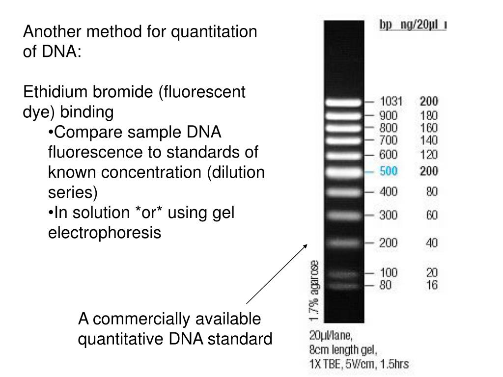 Another method for quantitation of DNA: