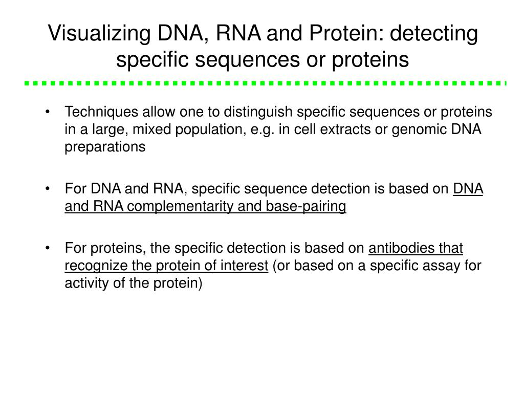 Visualizing DNA, RNA and Protein: detecting specific sequences or proteins