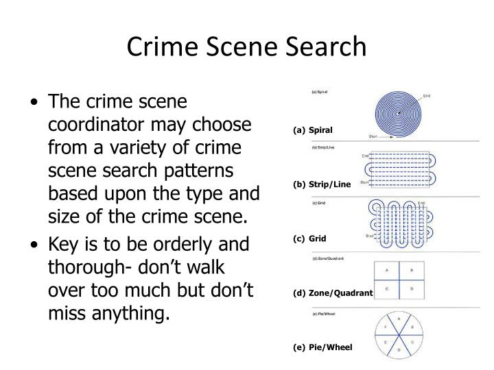 Crime Scene Search