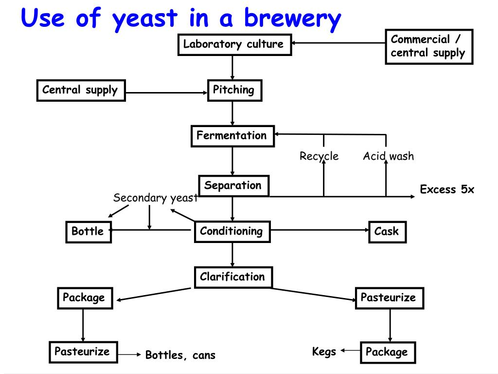 Use of yeast in a brewery