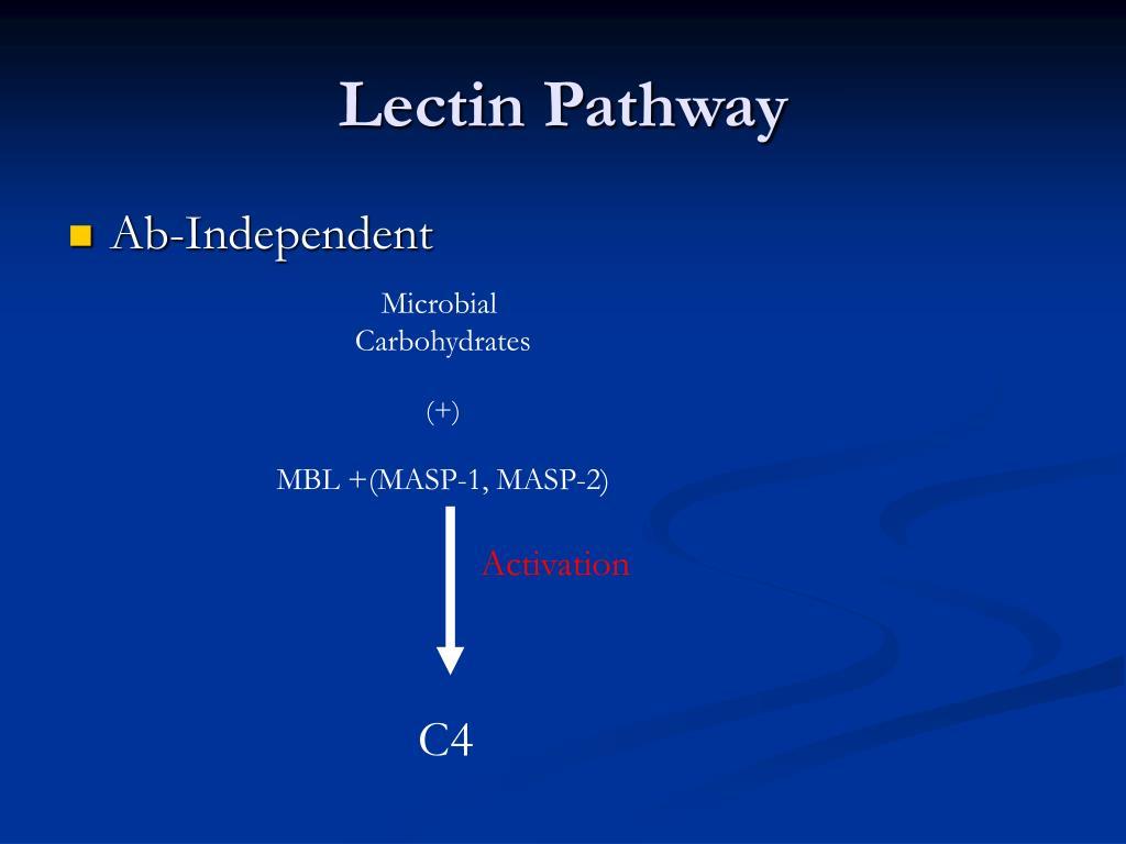 Lectin Pathway