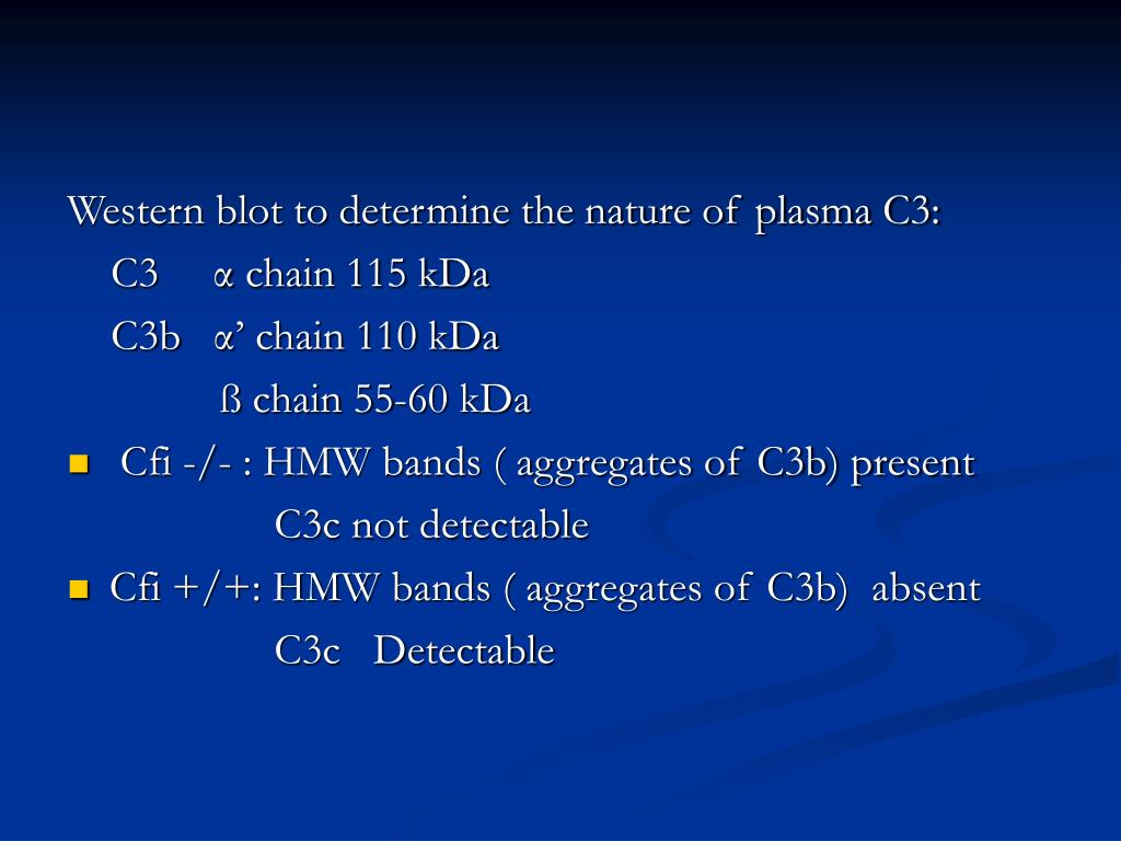 Western blot to determine the nature of plasma C3: