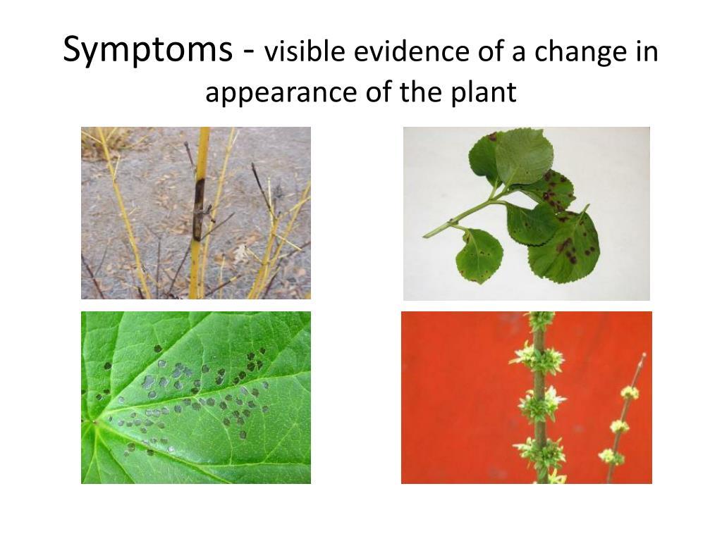 Symptoms -