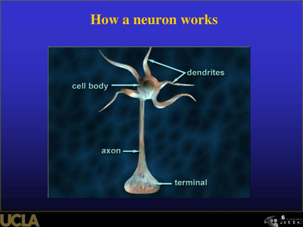 How a neuron works