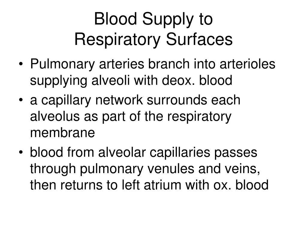Blood Supply to