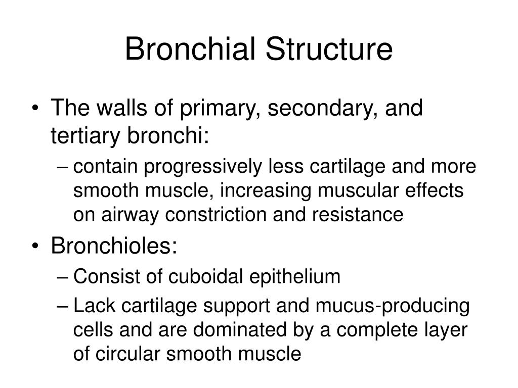 Bronchial Structure