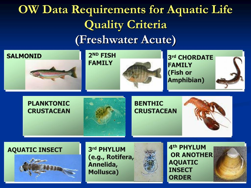 OW Data Requirements for Aquatic Life Quality Criteria
