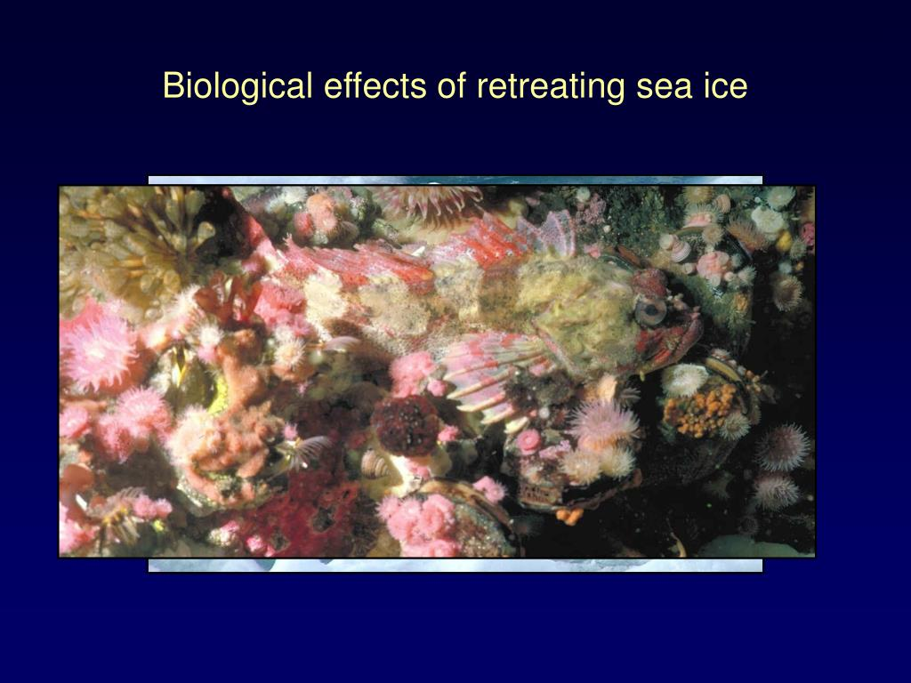 Biological effects of retreating sea ice