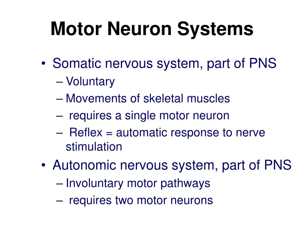 Motor Neuron Systems