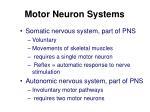 motor neuron systems