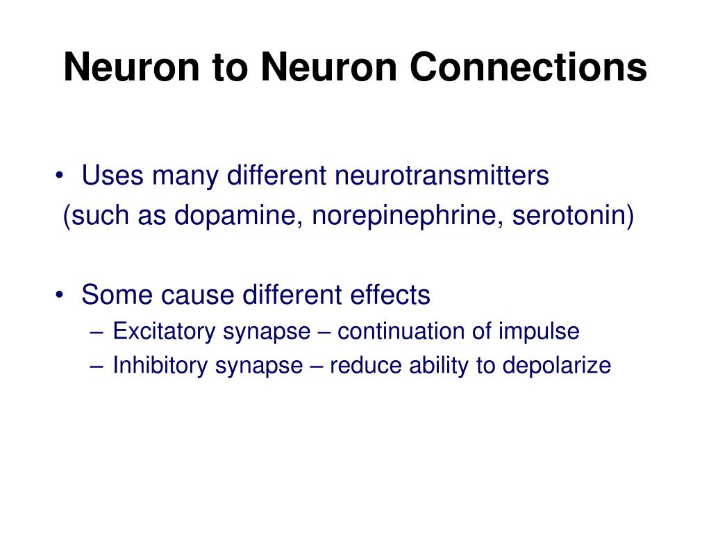 Neuron to Neuron Connections