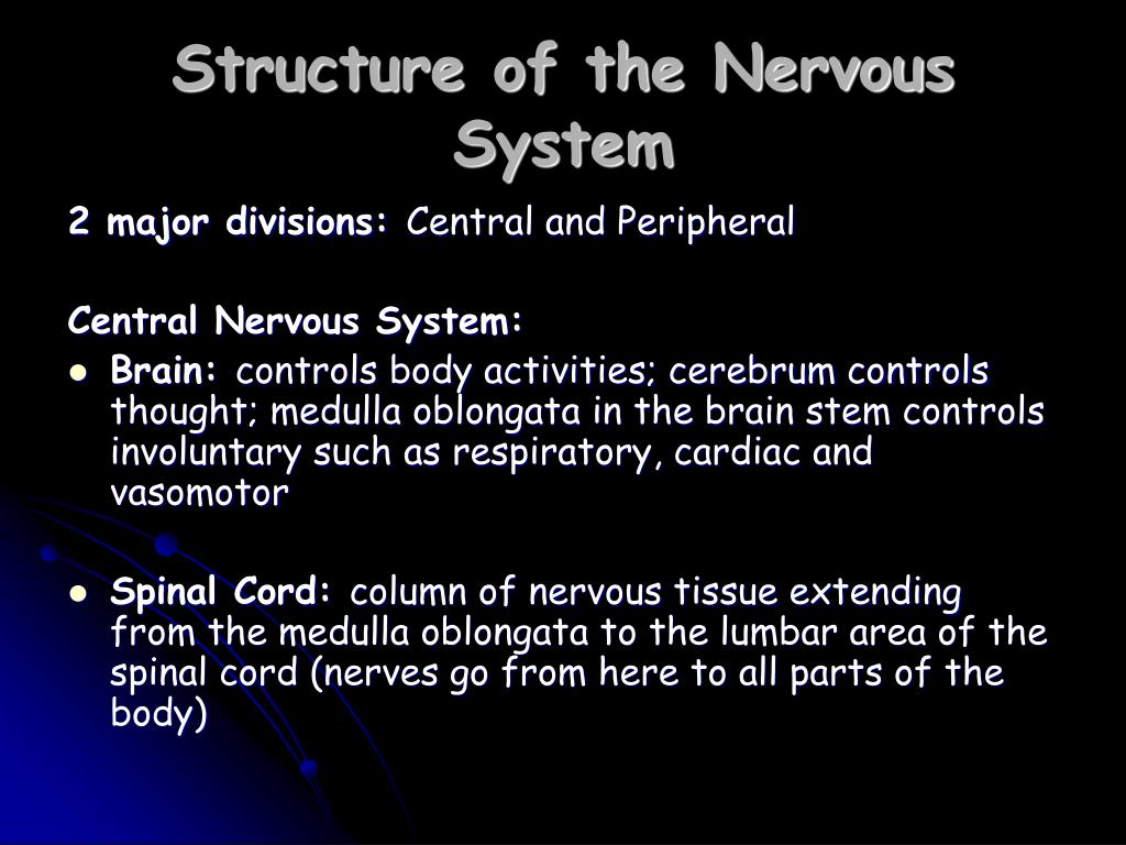 Structure of the Nervous System