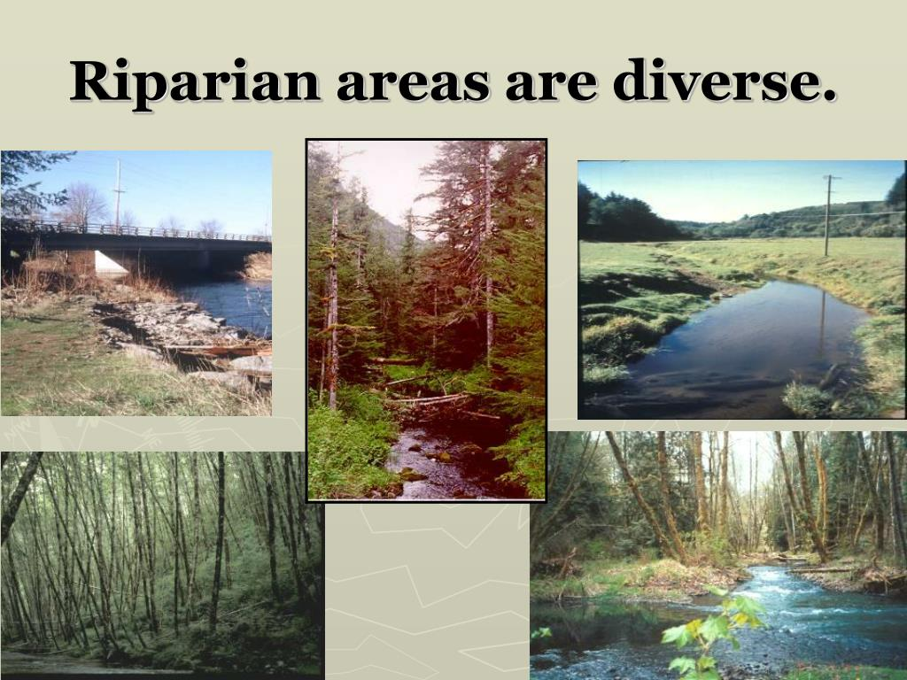 Riparian areas are diverse.