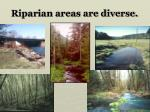 riparian areas are diverse