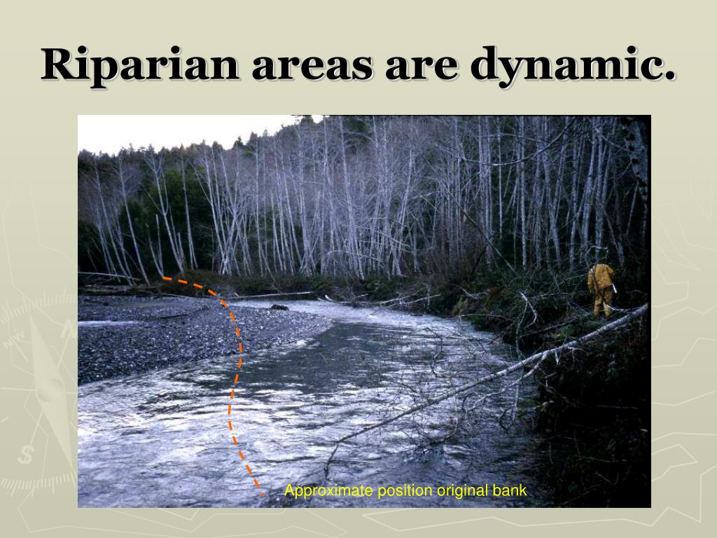 Riparian areas are dynamic.