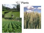 c 3 plants
