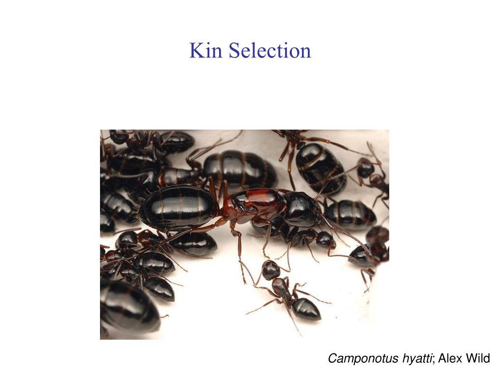 Kin Selection