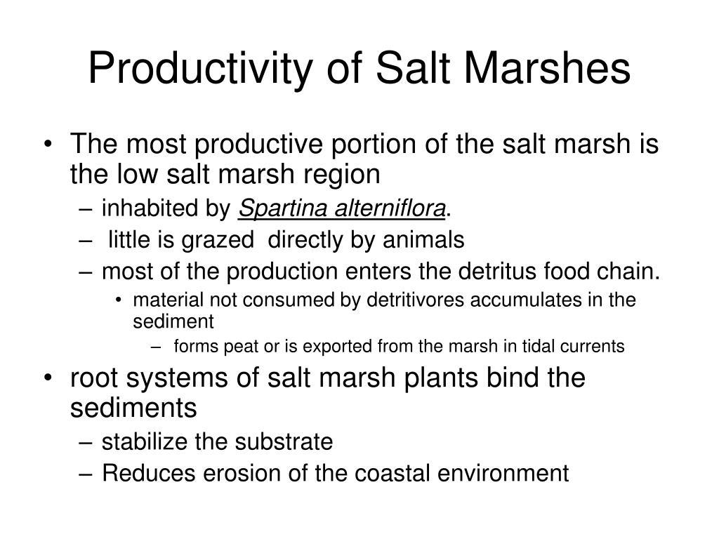 Productivity of Salt Marshes