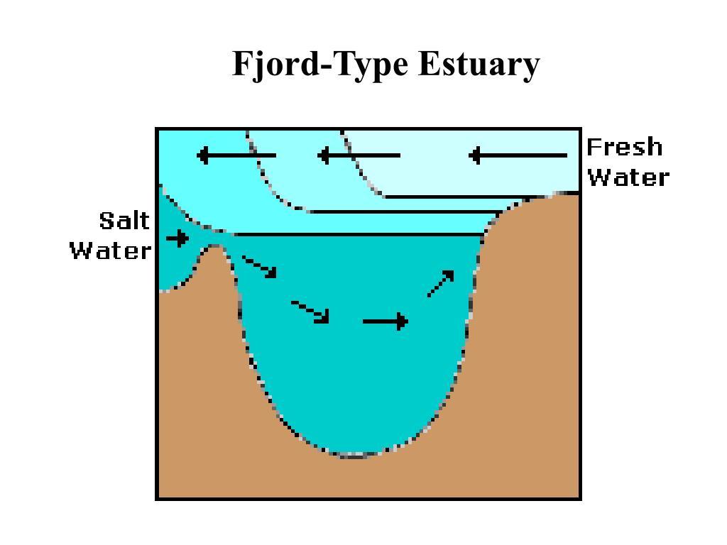 Fjord-Type Estuary