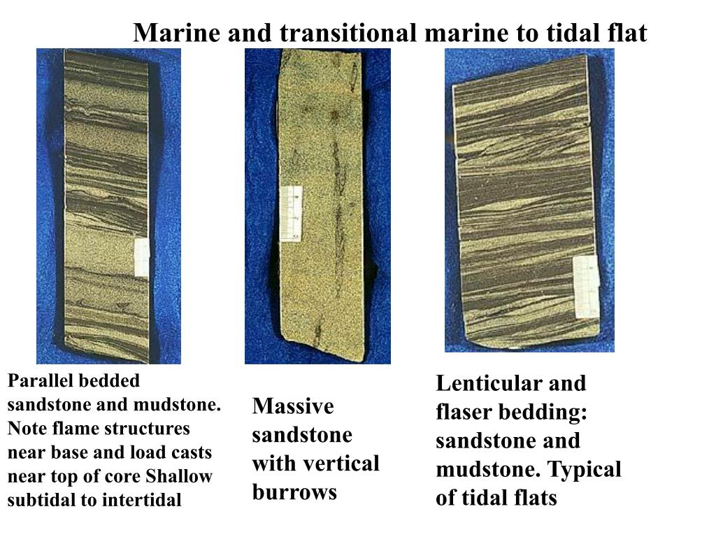 Marine and transitional marine to tidal flat