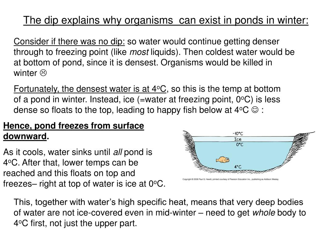 The dip explains why organisms  can exist in ponds in winter: