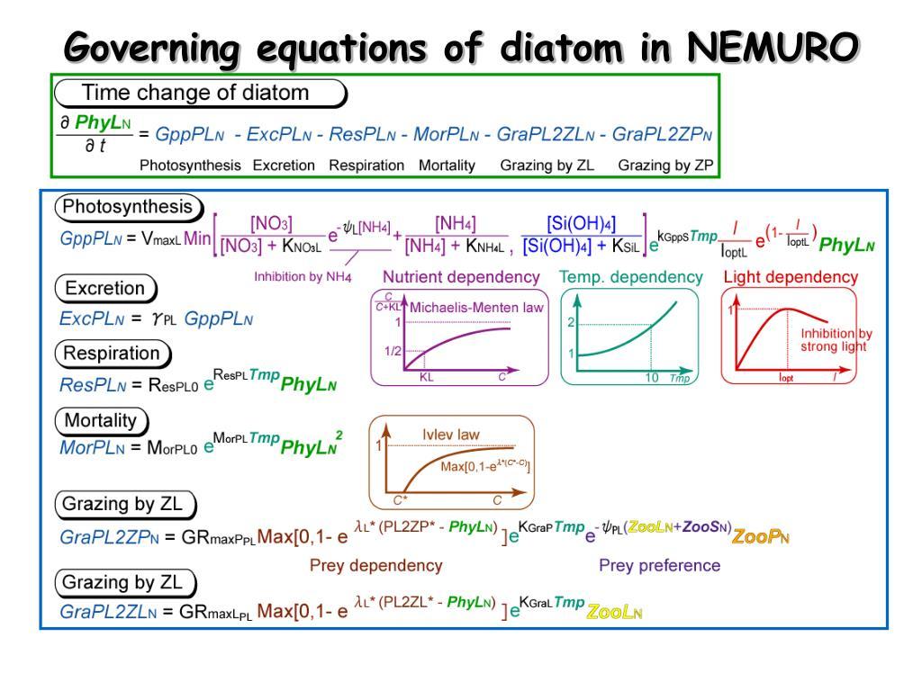 Governing equations of diatom in NEMURO