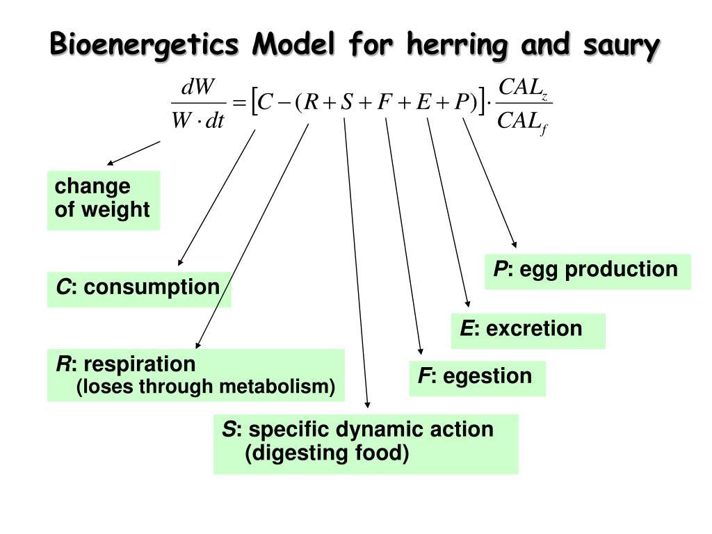 Bioenergetics Model for herring and saury