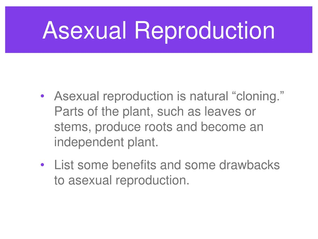 Asexual Reproduction
