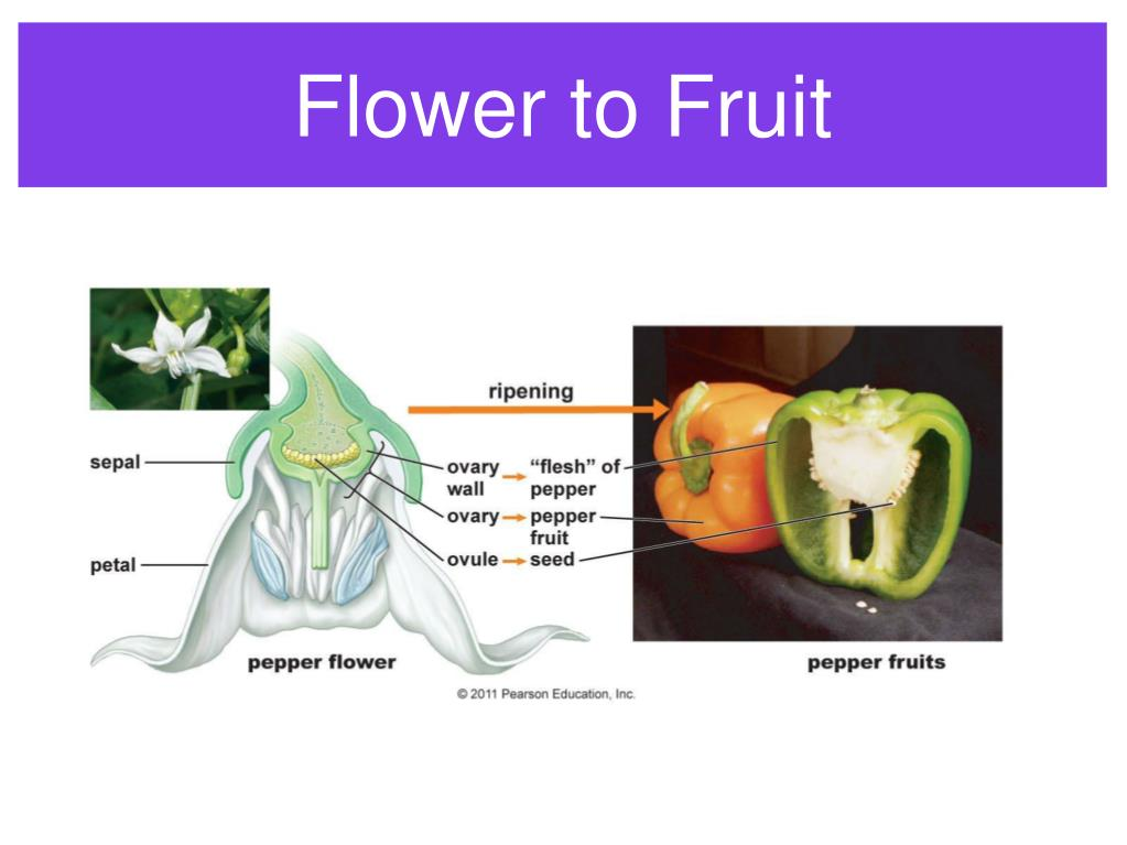 Flower to Fruit