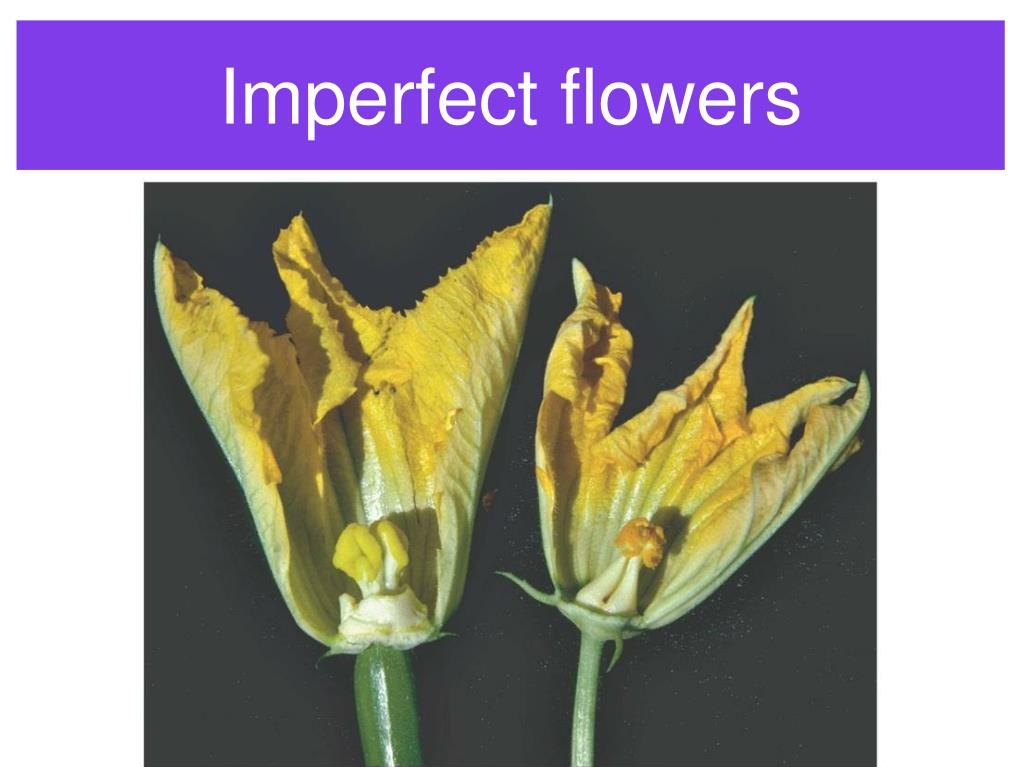 Imperfect flowers