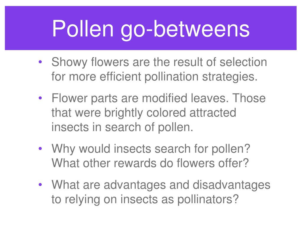 Pollen go-betweens
